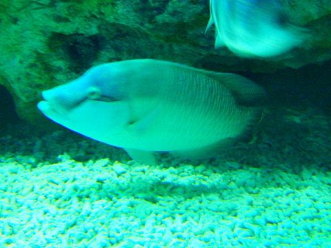 日本海溝の魚たち 5  日本海溝の魚たち 5  環太平洋